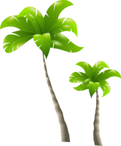 palm-trees.png
